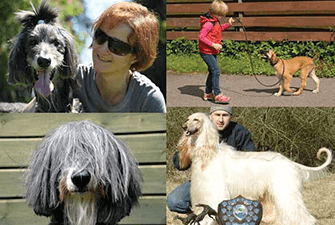 About Dog Moda. Designer of Whippet, Greyhound and sighthound collars, leads, accessories