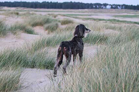 Full refund on returns of hound collars and dog leads from Dog Moda